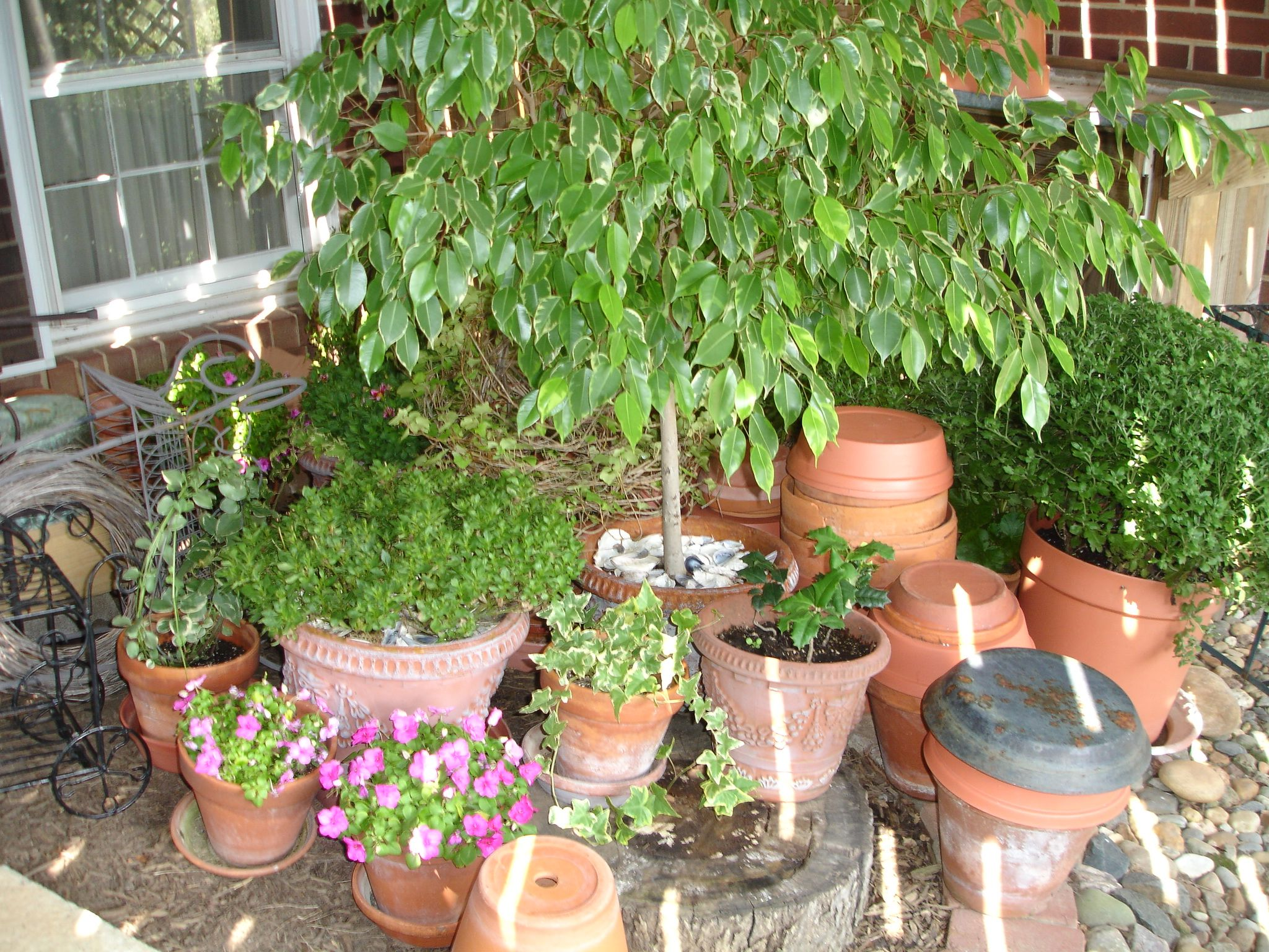 Lisa earthgirl gardening tips and helpful advice for Landscaping with potted plants