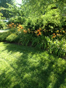 Happy Summer! A view of my daylilly garden.