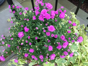 A beautiful pot of seasonal color will draw a buyers eye to the front door.