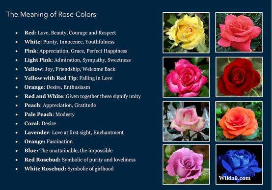 lisa earthgirl – gardening tips and helpful advice » roses, roses, Ideas