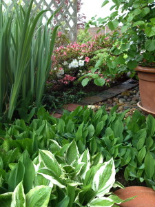 Spread coffee grounds around the base of hostas and other tender leafy plants like these lily of the valley, to keep slugs at bay.