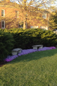 One last photo with the phlox in full bloom- it really was a beautiful Spring!