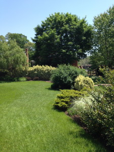 Perimeter garden creates texture while providing a barrier to keep rainwater in our yard.