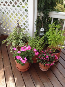 I like to bring some of my most used pots of herbs (mint and basil) up close to the kitchen door- very convenient!