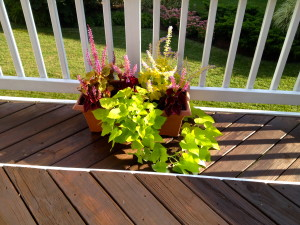 "I'm naming the coleus as my favorite ""Plant of the Summer."" It grows exceptionally well in containers, and the color ranges are so vivid and beautiful."