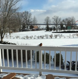 Robin surveying the snow-