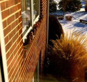 Robins sunning themselves on the window sill to stay warm they fluff out their feathers for insulation.