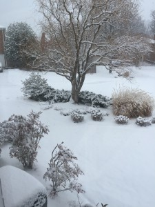 We have had every different type of snow this year, but this heavy snow is the most beautiful.