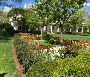 Tulip border garden surrounding the press area. Oval Office in background.