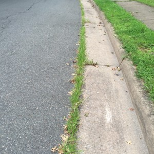 With all the heat and rain, we are getting lots of unsightly weeds.