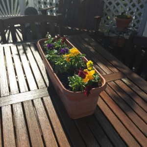 More pansies fill containers on the deck for entertaining outside.