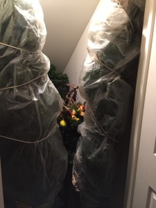 I store the trees wrapped in plastic tarps in the closet. Saves time on reassembly next year!