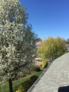 Bird's eye view of the tapestry of colors of the blooming trees.