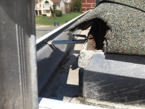 Here's why I think everyone should get a roof inspection. This is where a squirrel chewed a hole right on the corner. You can't see it from below, so we wouldn't have known it was there.