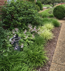 The liriope have become great border plants along the front walk. Every three years I can divide them into 4 to 6 new plants.