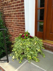 I have coleus in the planters this year. I love the bright splash of color-