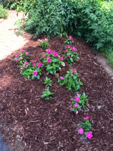 When it gets this hot it helps to keep the moisture in by stirring  up and adding some additional mulch in thin spots. Also boost the curb appeal!