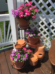 Up on the deck I am loving all the color from these vinca in pots. I also have these by the driveway.