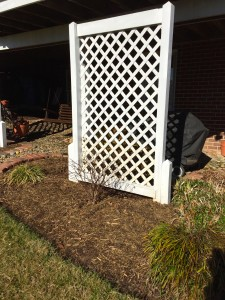 Here's a photo of my re make of the old planters into privacy screens. I removed the rotted supports and replaced with posts I had saved from an old job. These are buried 3 feet into the ground, no cement, so they can be re-positioned later if I want.