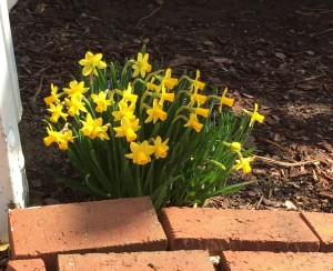 First Spring flowers are already blooming! Time to scratch up the mulch and enjoy the fresh Earth scent!